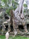 Schloss-Felsen in Kambodscha Lizenzfreie Stockfotografie