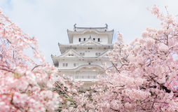 Schloss Japans Himeji, weißes Reiher-Schloss in schönem Kirschblüte-che Lizenzfreie Stockfotos