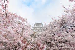 Schloss Japans Himeji, weißes Reiher-Schloss in schönem Kirschblüte-che Stockbild