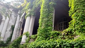Schlossbögen und -säulen entwirrt mit grünem Efeu stock video footage