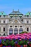 Schlossbelvedere Wien Stock Foto