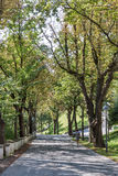 Schlossberg park autumn alley in Graz Royalty Free Stock Photos