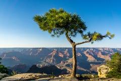 Schlucht-Baum Lizenzfreies Stockfoto