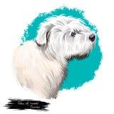 Schlucht Kunstillustration Hunderasse Imaal Terrier der digitalen lokalisiert auf Weiß Populäres Welpenporträt mit Text Nettes Ha lizenzfreie abbildung