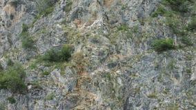 Schlucht von Fluss Uvac, Serbien Lizenzfreie Stockfotografie