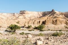 Schlucht von Wadi Ash Shuwaymiyyah (Oman) Stockfotografie
