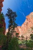 Schluchten im Staat Utah stockbild