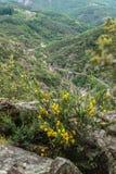 Schluchten von Baume, ardeche, Frankreich lizenzfreies stockfoto