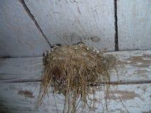 Schlucken Sie Nest im alten Stall mit littlle swalows Stockbild