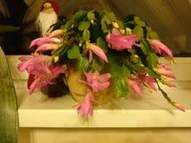 Schlumbergera Художнический взгляд на цветке Стоковое Изображение RF