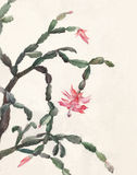 Schlumbergera flowers watercolor painting Stock Image