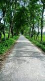 Schmale Dorf-Straße in Bangladesch lizenzfreie stockfotografie