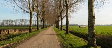 Schmale Landstraße zwischen einer Baumreihe Lizenzfreie Stockfotografie