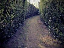 schmale Straße in einem verwickelten Labyrinth von hohen Hecken Stockbilder