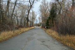 Schmale unfruchtbare gepflasterte Straße im Wald Stockfoto