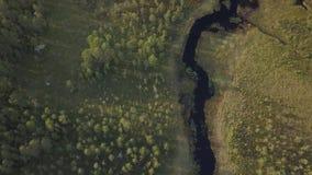 Schmaler Fluss in einem Wald stock video footage