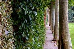 Schmaler Gehweg zwischen Efeu und Bäumen Stockbilder