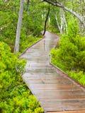Schmaler hölzerner Weg im Wald Stockfoto