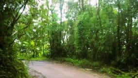 Schmaler steigen Schotterweg durch dichten tropischen Regenwald stock footage