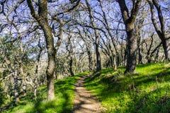 Schmaler Wanderweg durch einen Wald im Coyote See Harvey Bear Ranch County Park stockbilder