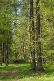Schmaler Weg durch Frühlingsvorderteile Stockfoto
