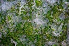 Schmelzender Schnee Stockfoto
