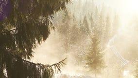 Schmelzender Schnee der Frühlingssonne auf den Tannenzweigen mit Gebirgshaus auf dem Hintergrund stock footage