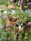 Schmetterling στοκ φωτογραφία με δικαίωμα ελεύθερης χρήσης