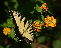 Schmetterling 1 Stockfotos