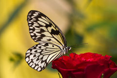 Schmetterling Photographie stock