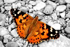 Schmetterling Stockbild