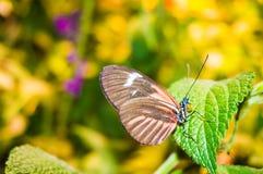 Schmetterling Stockbilder