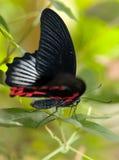 Schmetterling lizenzfreies stockbild