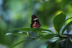 Schmetterling auf Blatt stockbilder