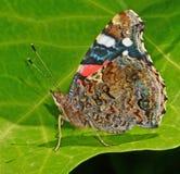 Schmetterling auf Blatt Lizenzfreie Stockfotos