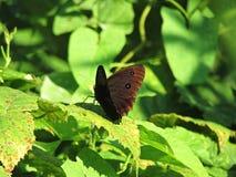 Schmetterling auf Blatt lizenzfreies stockfoto