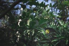 Schmetterling auf Blatt in der dunkelgrünen Stimmung Lizenzfreies Stockfoto