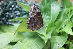 Schmetterling auf Blatt lizenzfreie stockbilder