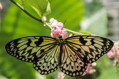Schmetterling auf Blume Lizenzfreies Stockbild