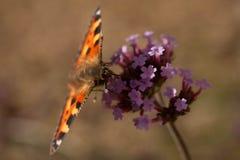 Schmetterling auf Blume stockfotos
