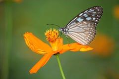 Schmetterling auf Blume Stockfoto