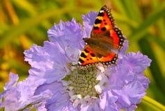 Schmetterling auf Blume Lizenzfreies Stockfoto