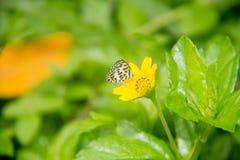 Schmetterling auf Blume Lizenzfreie Stockfotos
