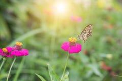 Schmetterling auf Blume im tropischen Garten Stockbild
