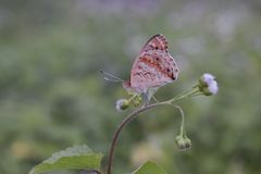 Schmetterling auf Blumennaturinsekt stockfotografie