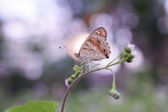 Schmetterling auf Blumennaturinsekt stockfoto