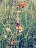 Schmetterling auf Blumenweinleseart Stockbild
