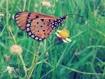 Schmetterling auf Blumenweinleseart Stockfoto