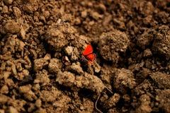 Schmetterling auf Boden Lizenzfreie Stockbilder