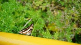 Schmetterling auf Brücke lizenzfreie stockfotos